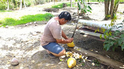pépé coupe les noix de coco